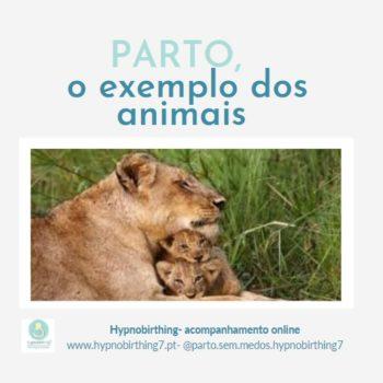 parto e animais